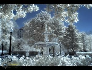 Magical Forsyth Park