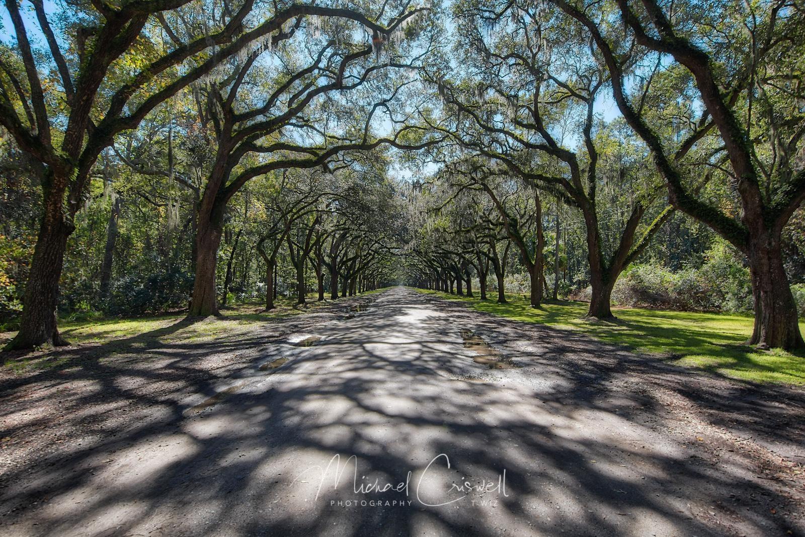 Wormsloe Shadows