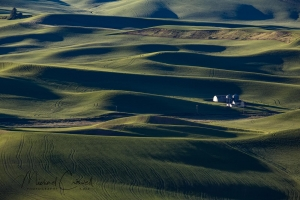 Lines of Palouse II