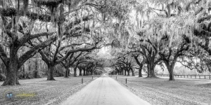 Boone Hall Live Oak Lane