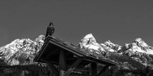 Raven\'s Watch