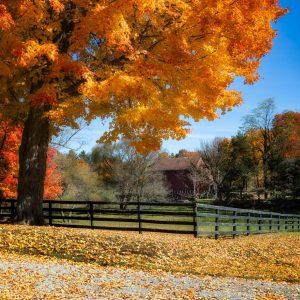 Ohio Autumn