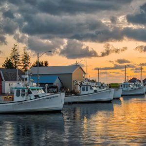 Malpeque Harbor Morning