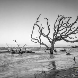 The Allure of Driftwood Beach