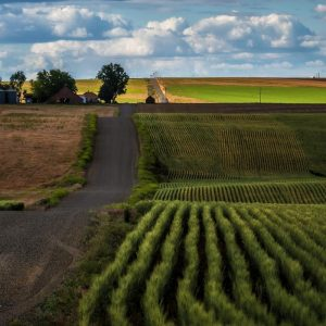 Road to Palouse