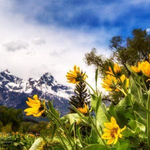 Teton Spring