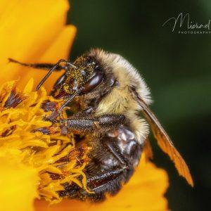 Grabbing some Pollen